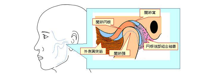 顎関節の位置